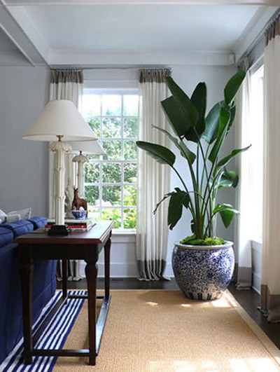 Beautiful Big Indoor Plants Ideas - Amazing House Decorating Ideas ...