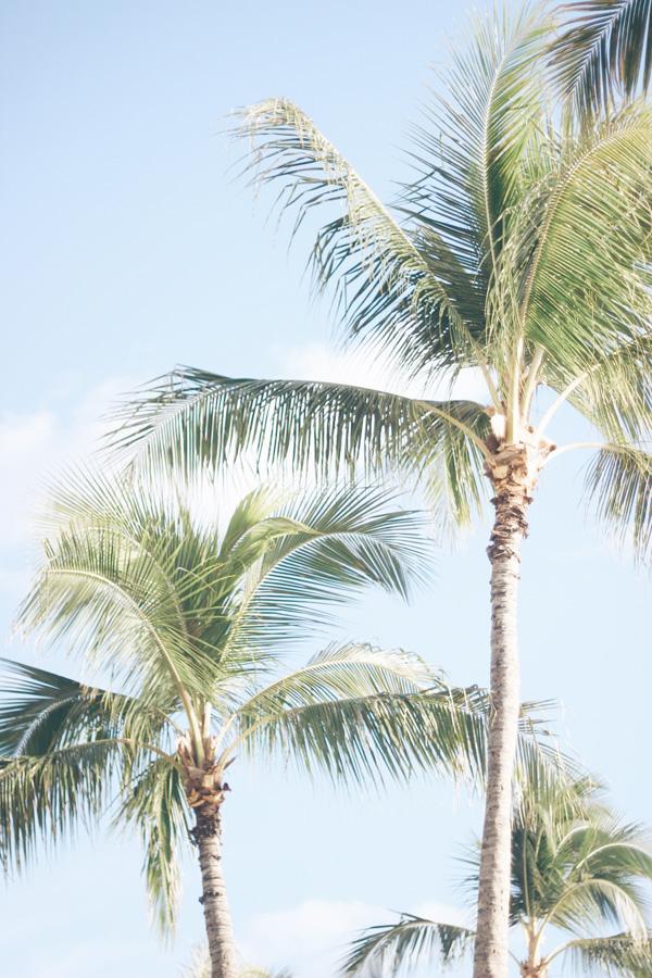 Hawaii fall getaway Erika Brechtel Waikiki Beach palm trees