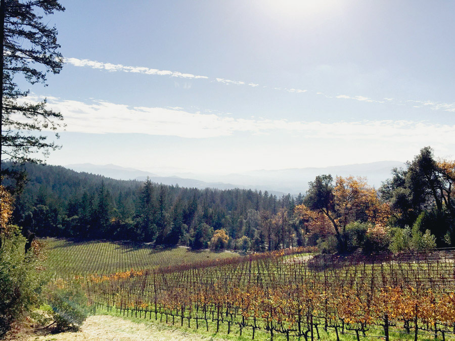 Napa Valley Thanksgiving Erika Brechtel Cade Winery valley floor view