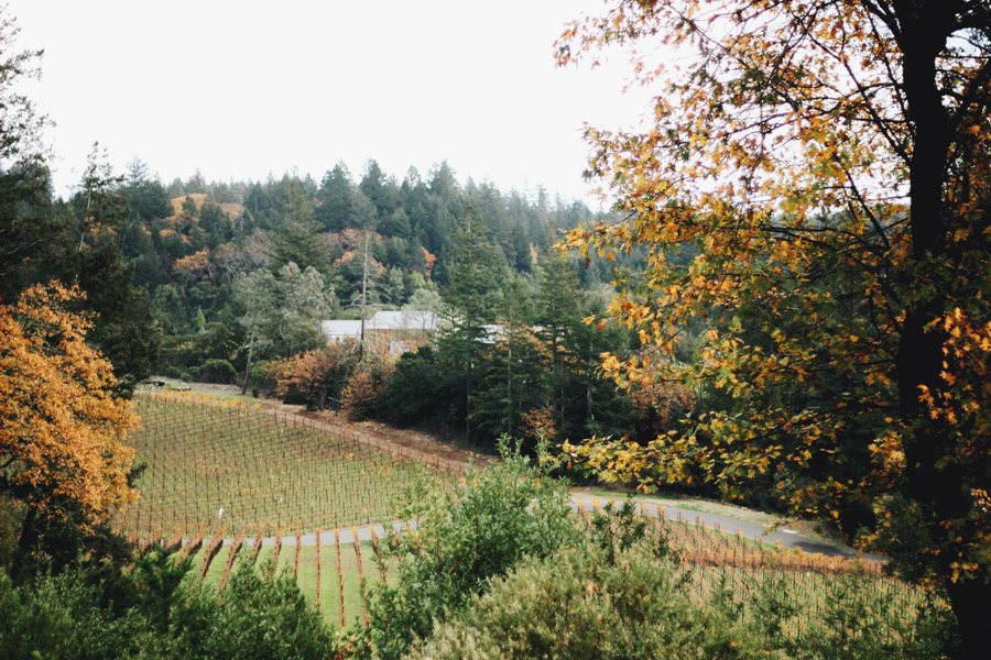 Napa Valley Thanksgiving Erika Brechtel Cade Winery vineyard view