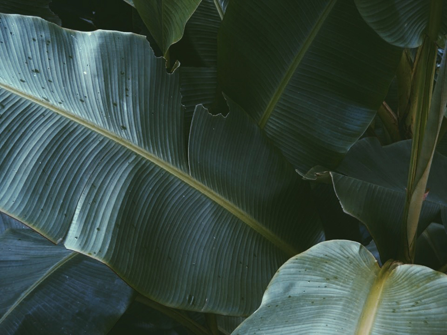 palm leaves detail via ivanarevic tumblr